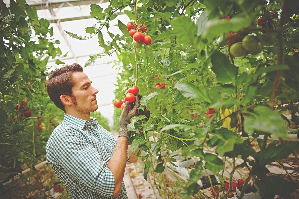 Landgard Neuss moderne vermarktung für floristik obst gemüse landgard de